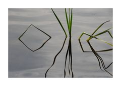 Schilfgräser