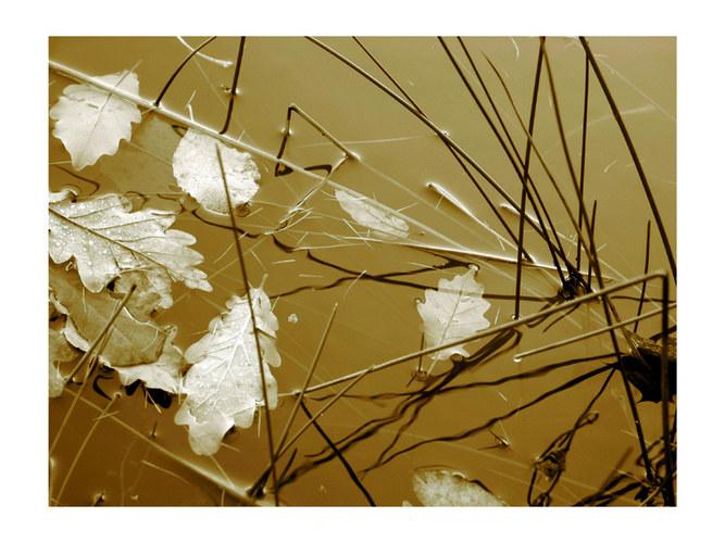 Schilfgraswasserblätter