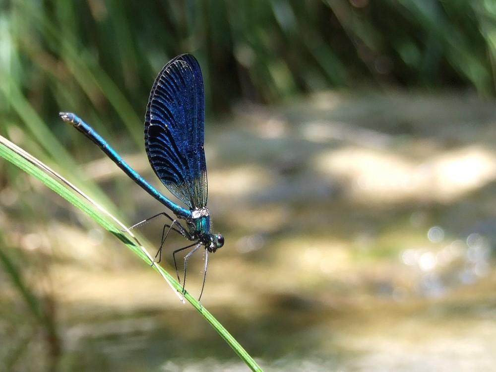 Schillernd blau