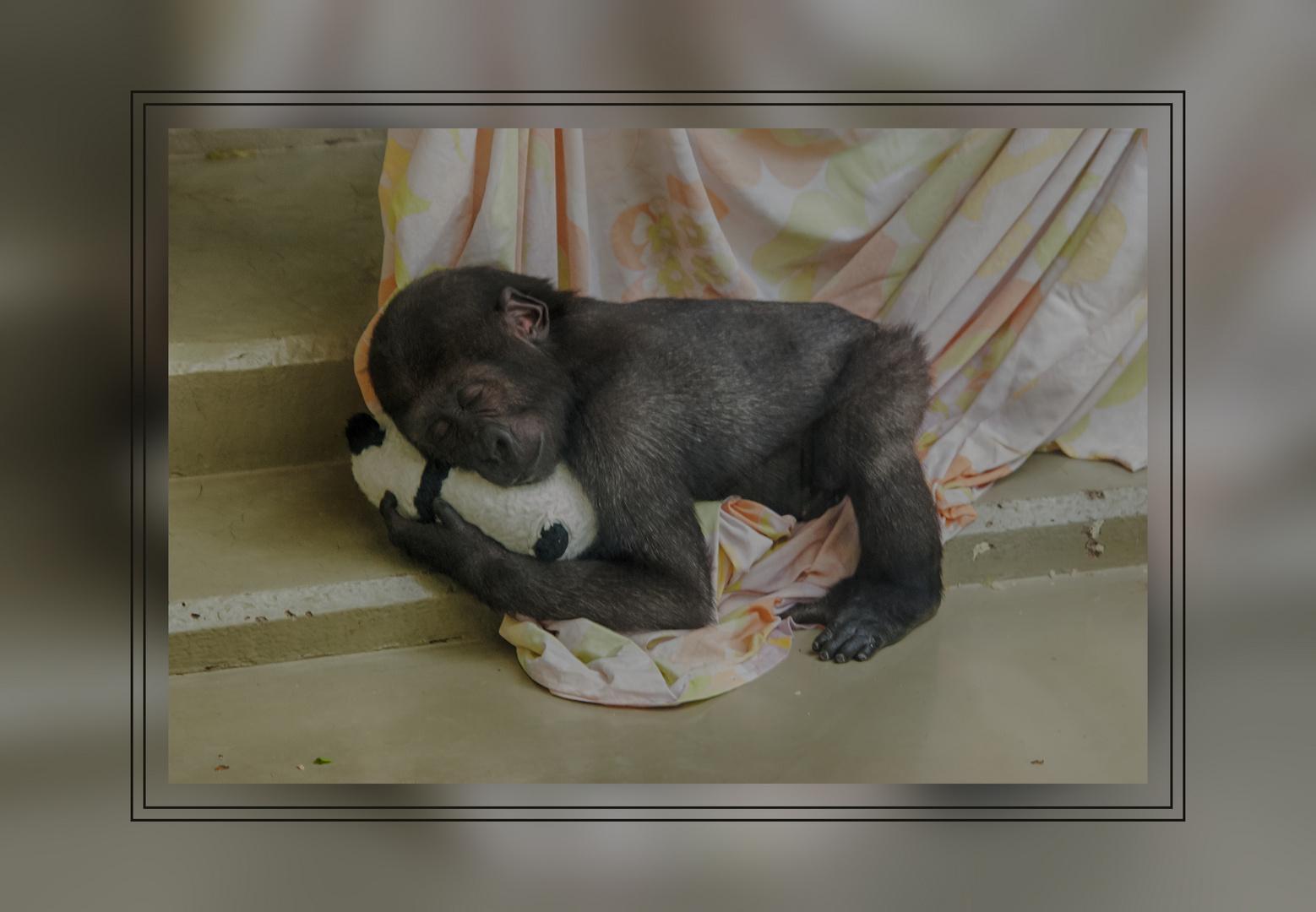 Schimpansen-Baby