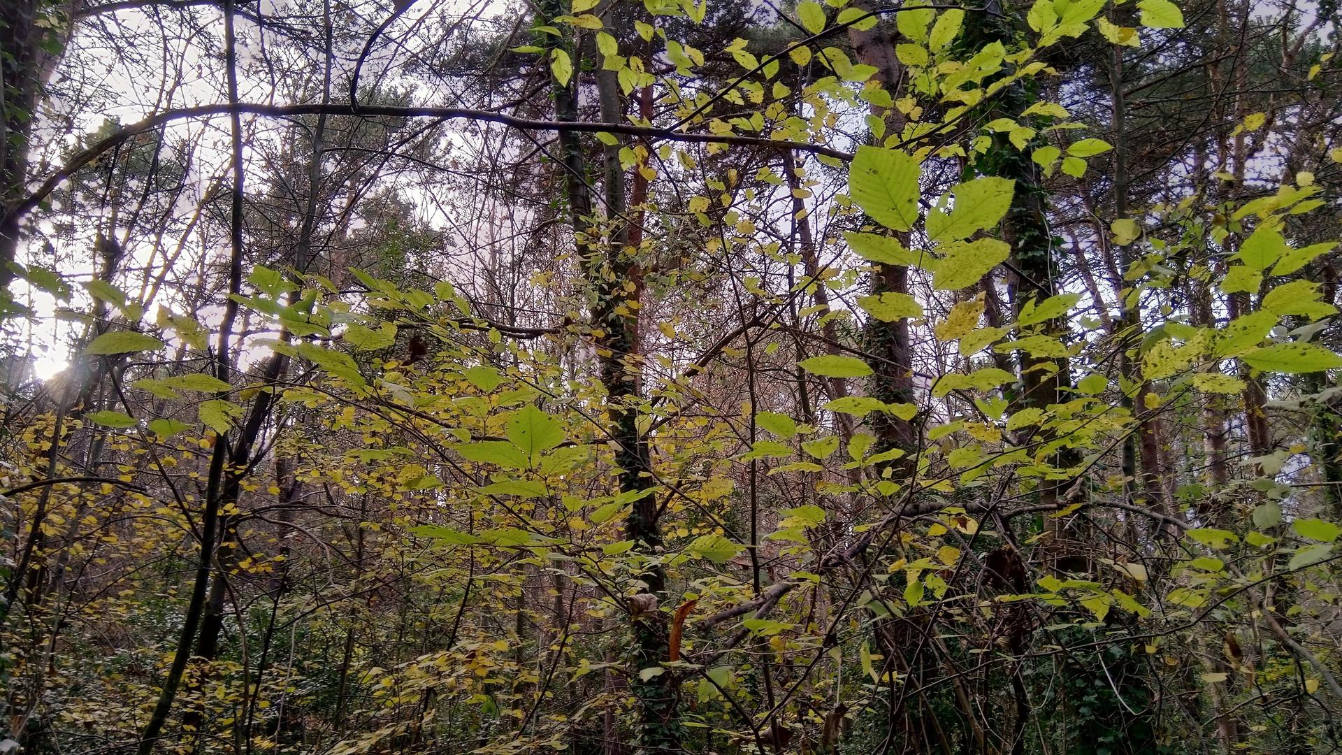 Schizzi nel bosco...