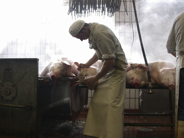 Schlachtung