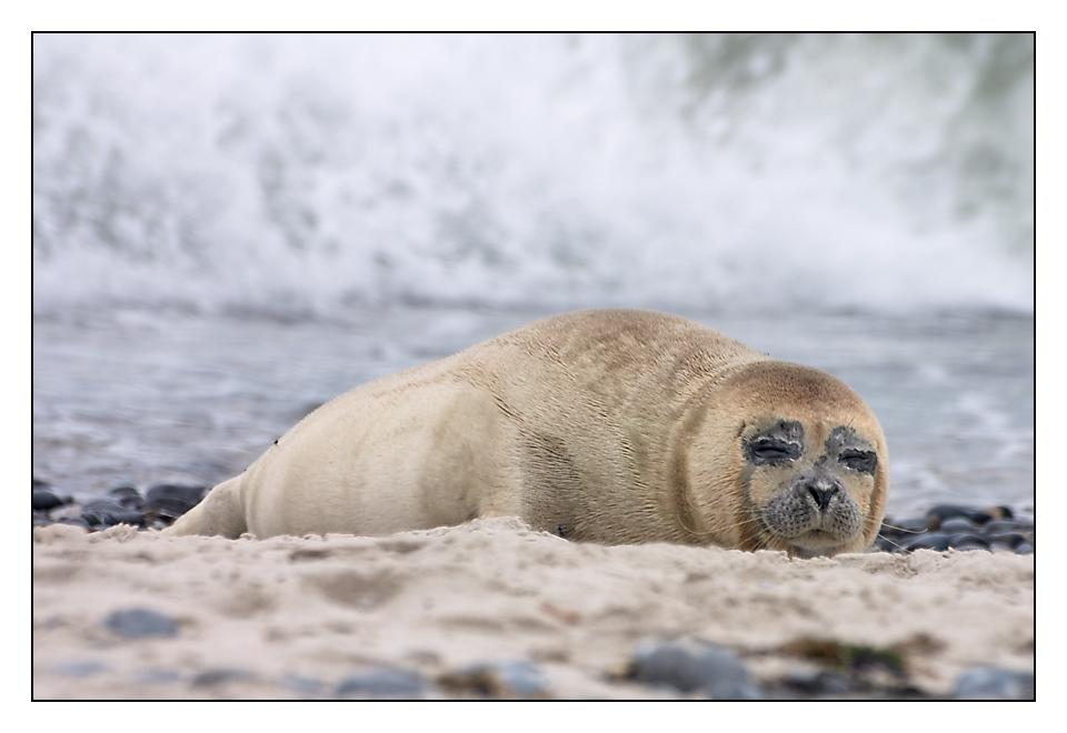 Schläfchen bei Meeresrauschen....
