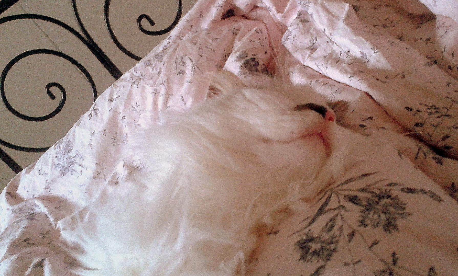 schläft tief und fest