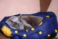 Schlaf Egor schlaf,...