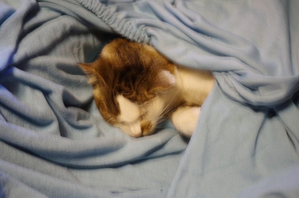 Schlaf gut, Dicker