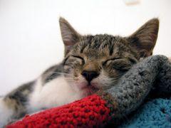 Schlaf gut...