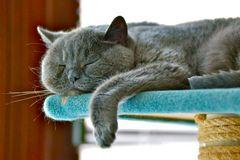 Schlaf gut, kleine Lady...