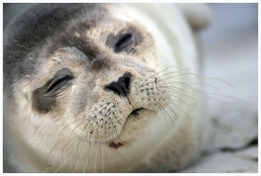 Schlaf gut, kleiner Seehund....