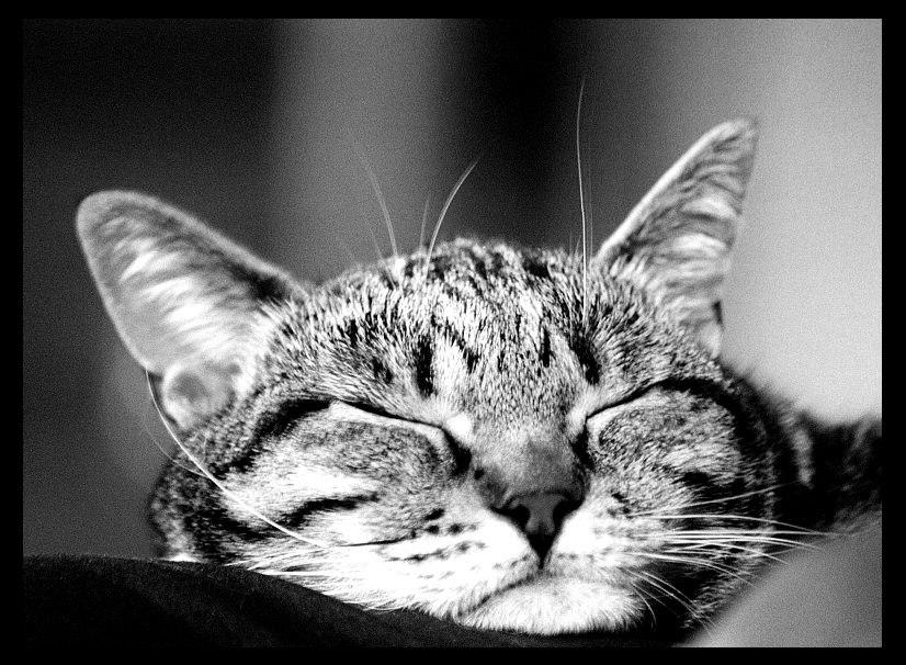 Schlaf gut und mach die Augen schön fest zu