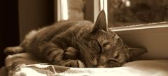 Schlaf, kleiner Tiger ...