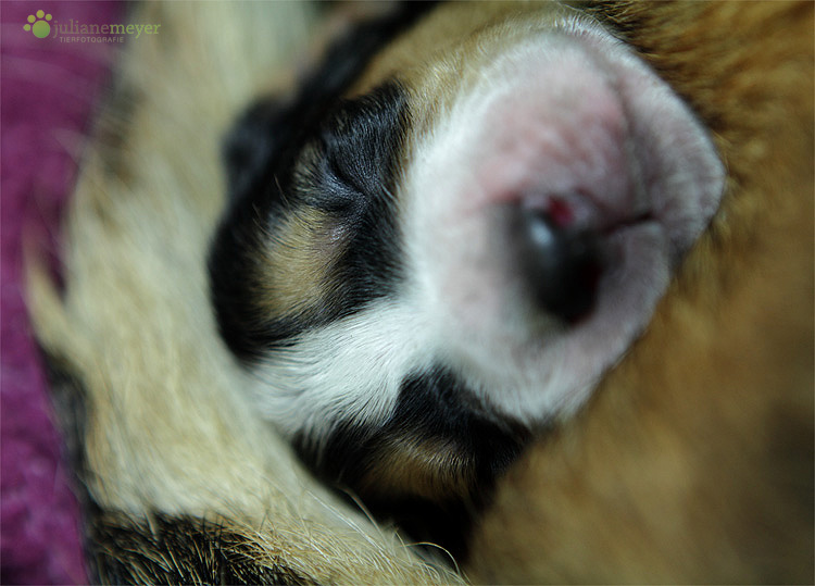 Schlafen an Mutties Boppes ;-)