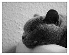 Schlafen ist so schön