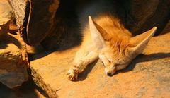 Schlafend