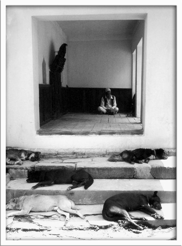 Schlafende Hunde