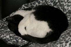 Schlafende Samtpfote