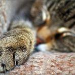 Schlafende Tatze...