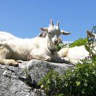 Schlafidylle bei der Alp Grueb :-)