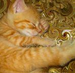 Schlafkätzchen