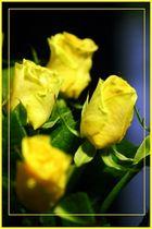 Schlaflos - Rosen der Vergänglichkeit