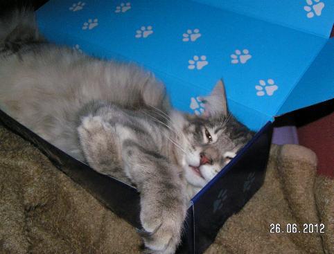 Schlafmütze Purzel
