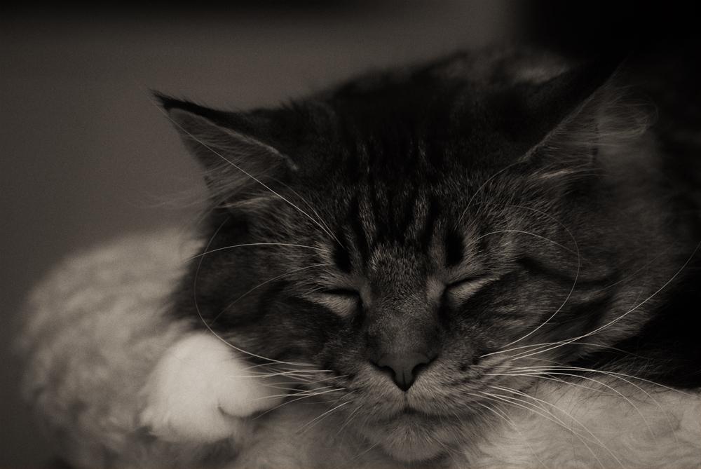 Schlaft gut...