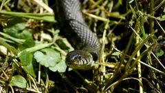 Schlange bei Allerheiligen