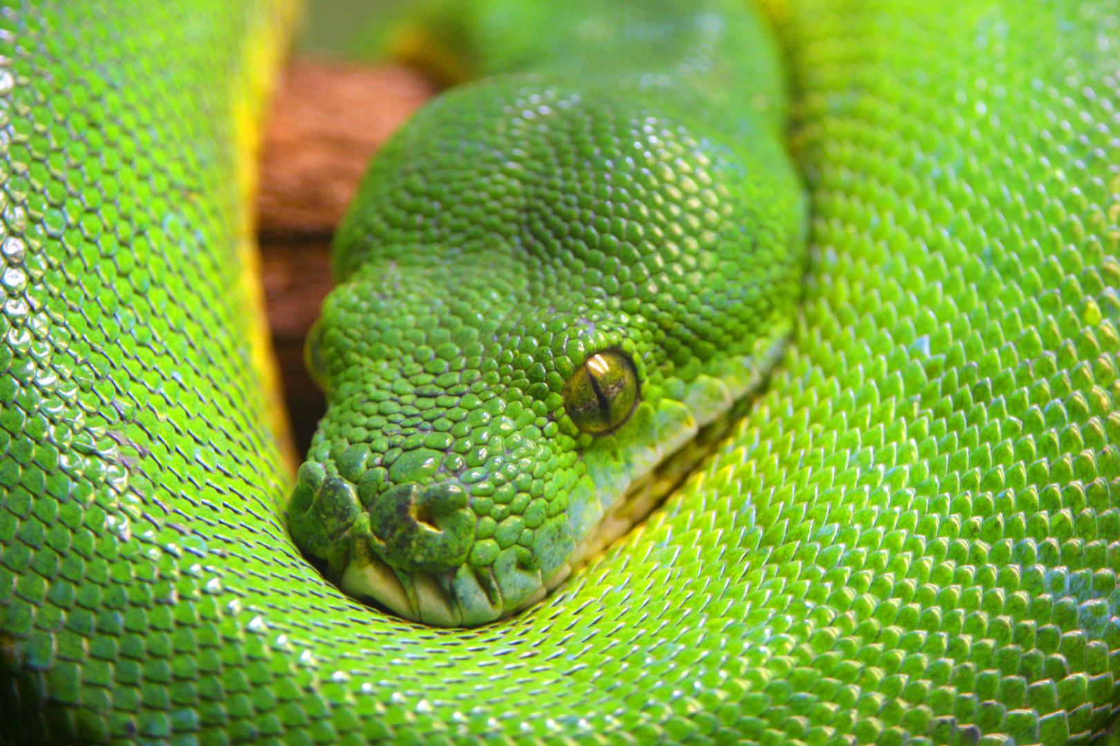 Schlange - heute ganz in grün #2