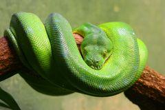 Schlange - heute ganz in grün