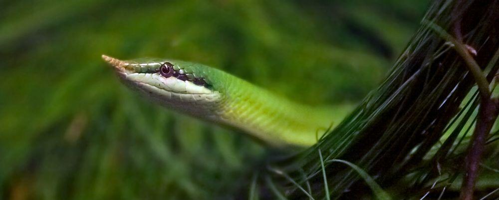 Schlange im Urwald eines Terrariums!