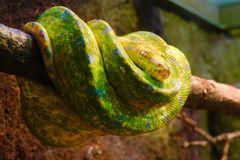 Schlange - wer kennt den Namen?