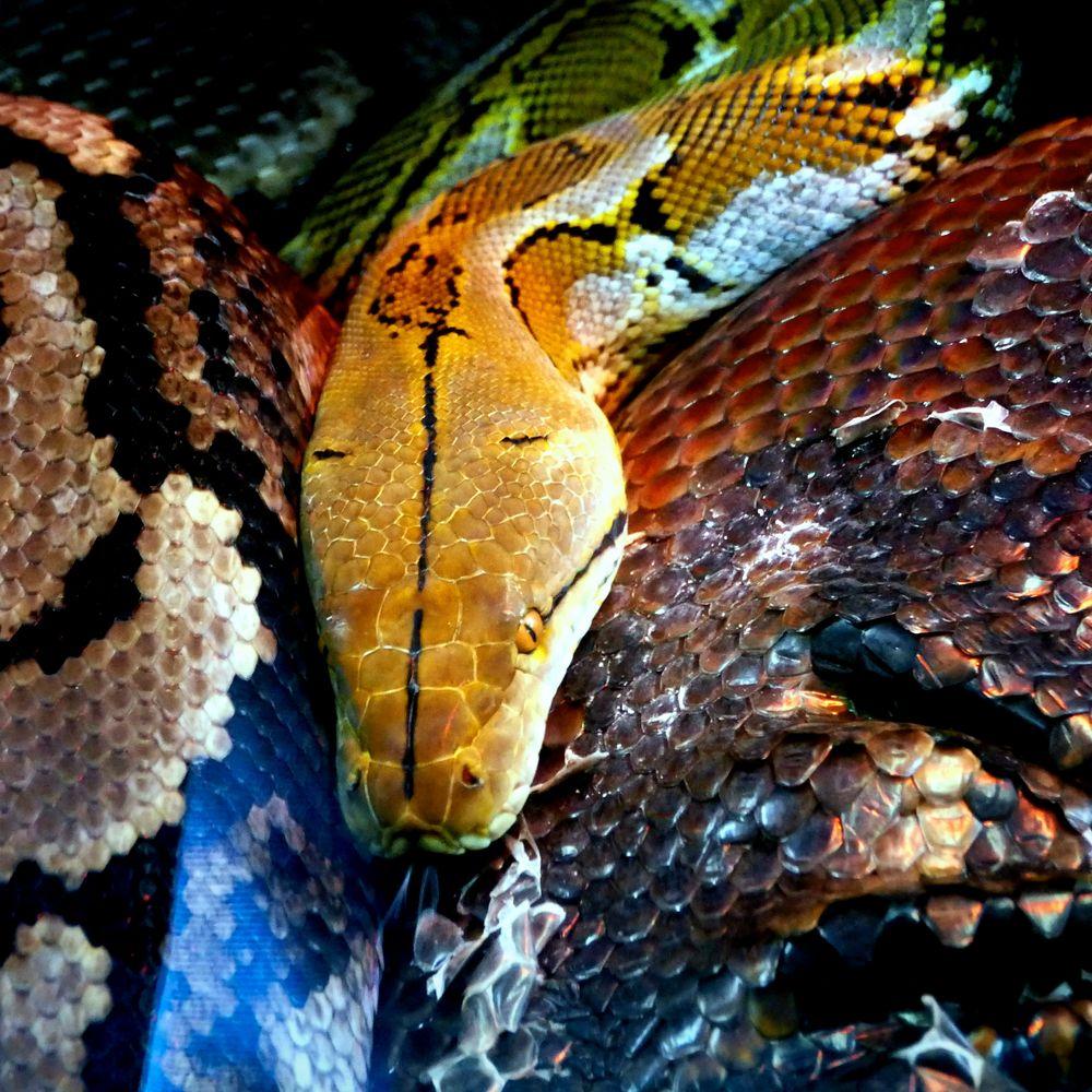 Schlangengrube