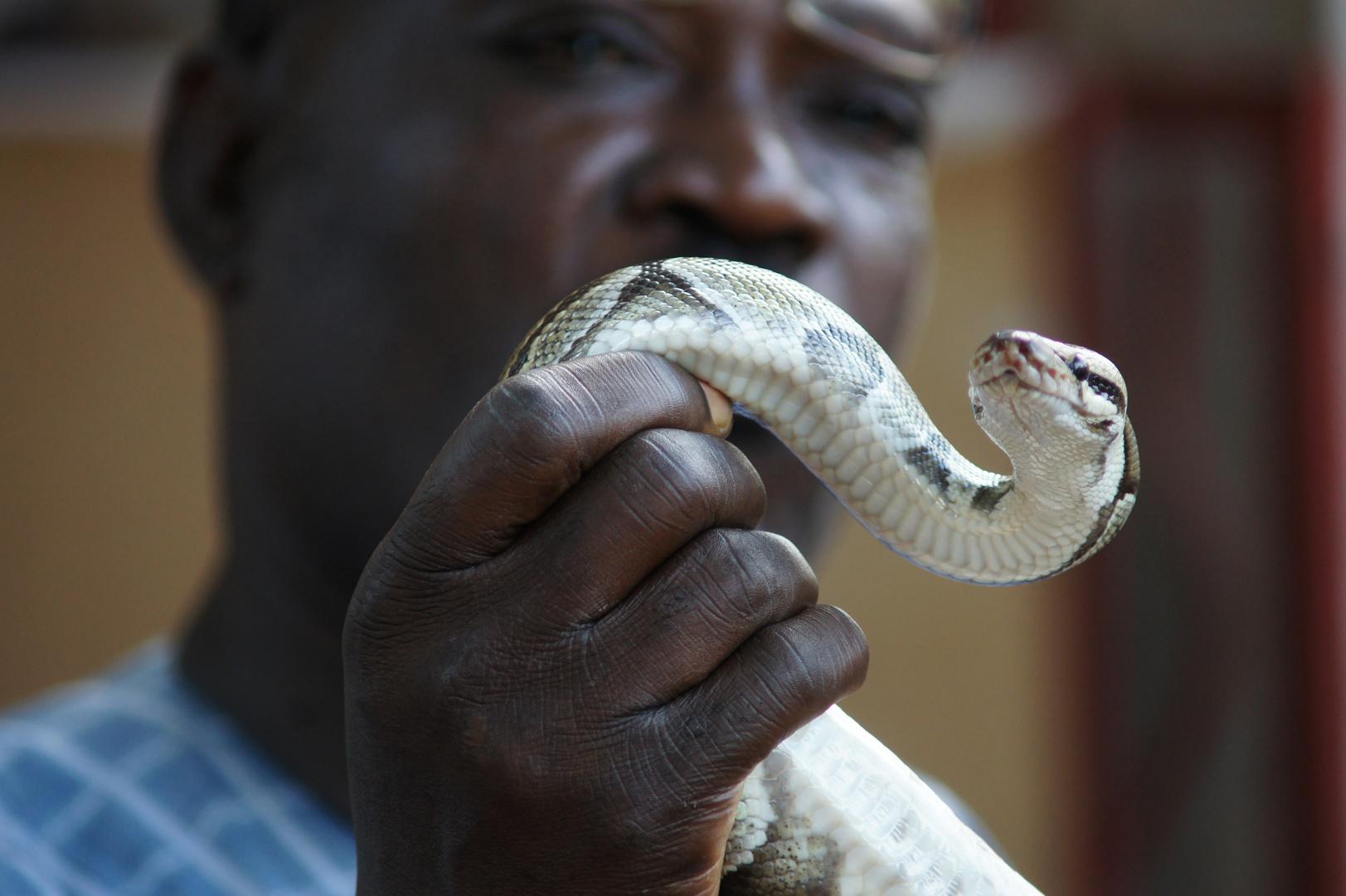 Schlangenpriester