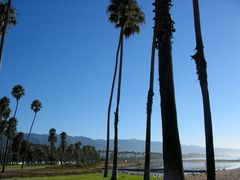 Schlanke Palmen in der Morgensonne