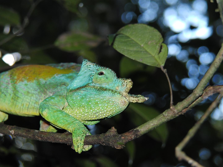 Schlecht Geschlafen Foto Bild Tiere Wildlife Amphibien