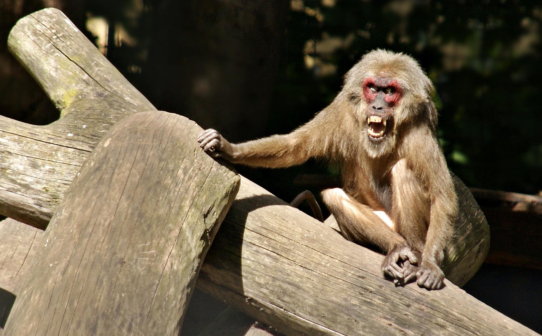 Schlechte Laune? Foto & Bild | tiere, zoo, wildpark
