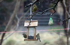 Schlechtwetter im Vogelhäuschen