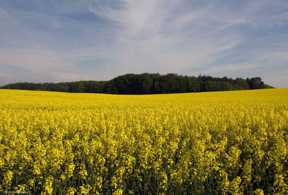 Schleswig-Holstein , das schönste Deutschland