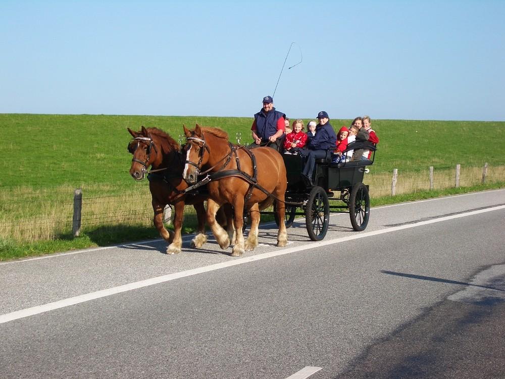 Schleswiger am Deich
