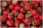 Schlicht und ergreifend - Erdbeeren