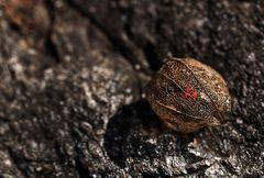 schließlich in einer laube unter dem zwerchfell fand man ein nest von jungen ratten