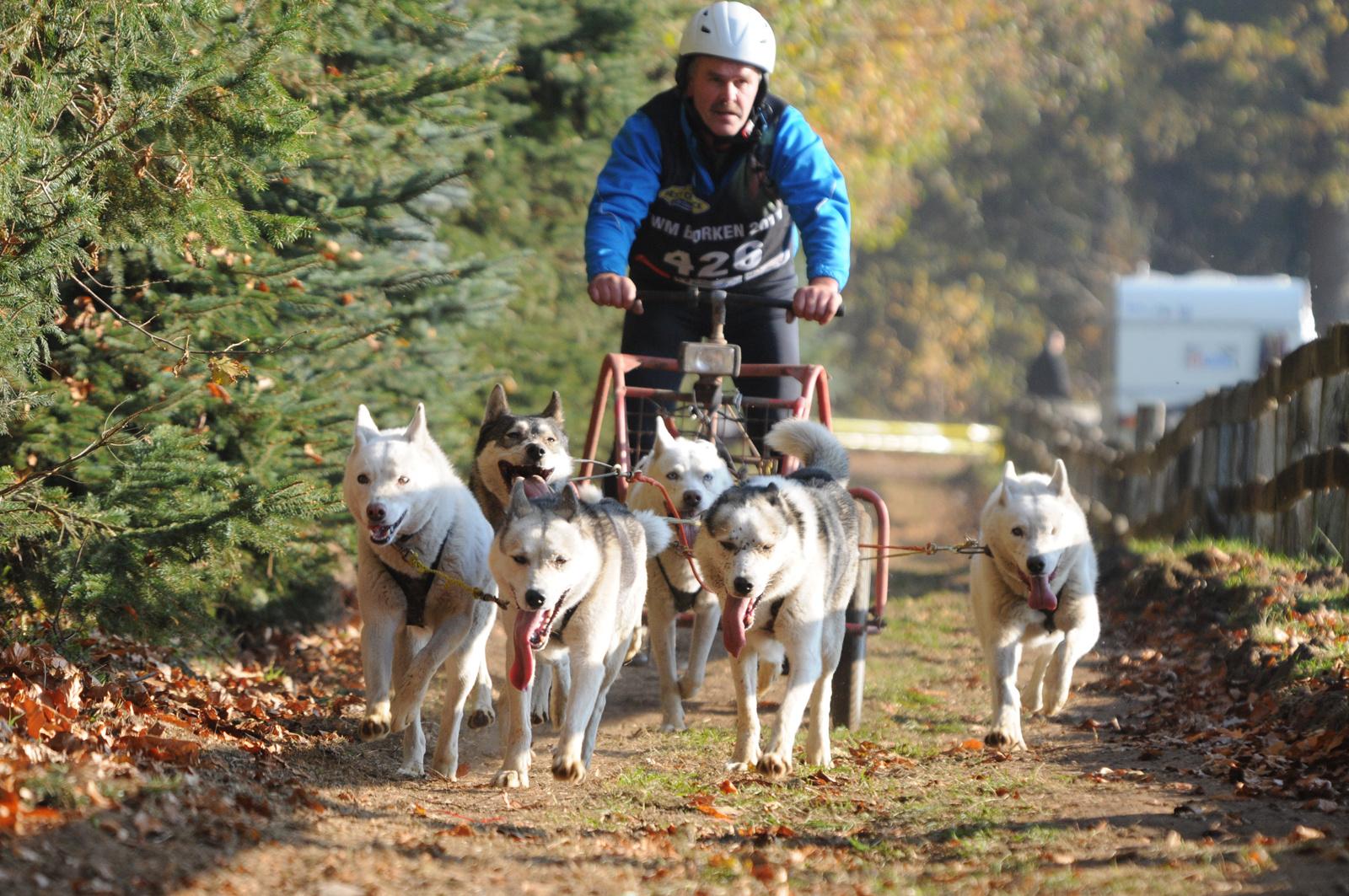 Schlittenhunde WM-2
