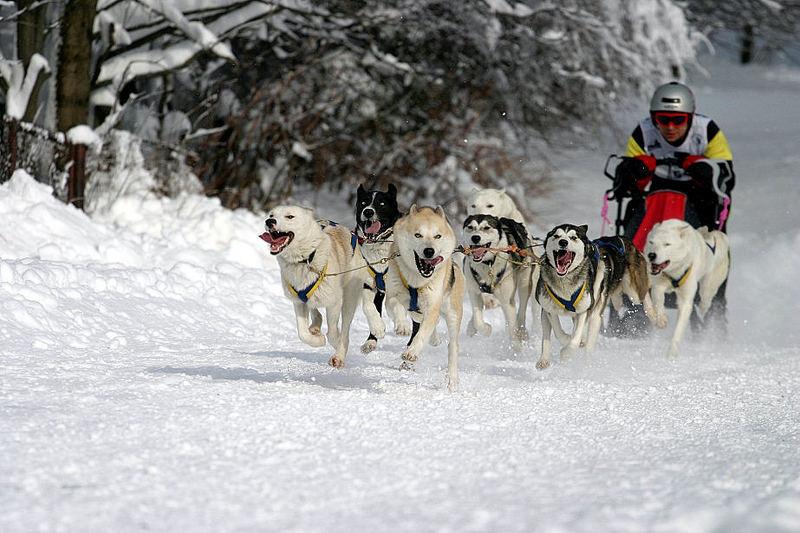 Schlittenhunde-WM Frauenwald