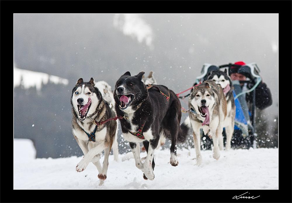 Schlittenhunderennen in Bad Hindelang / Unterjoch 2010