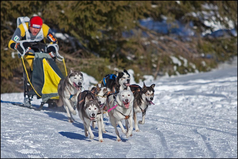 Schlittenhunderennen in Unterjoch 16.01.2010