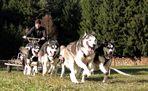 Schlittenhunderennen Reingers (2011) - Part 1