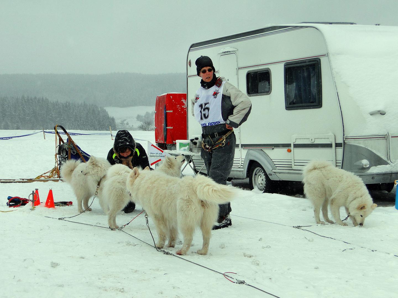 Schlittenhunderennen Tettau 2.Januar2010,Im Basislager