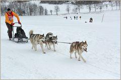Schlittenhundrennen in Claustahl-Zellerfeld
