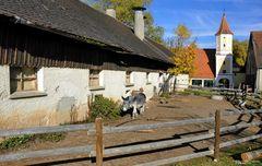 Schloss Blumenthal, bayerisch * biologisch * vegetarisch