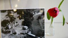 Schloss Buddenburg und die Tulpe